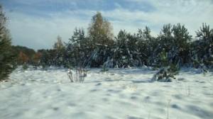 Zima2012_grudzień